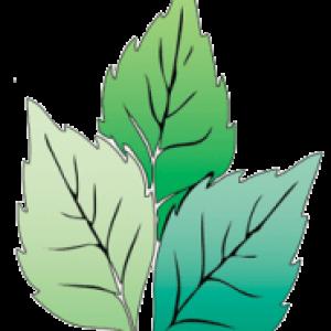 holisticspa-logo